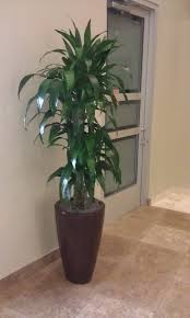 framingham ma interior landscaping and office plants