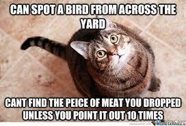 Stupid Cat Meme - stupid cats by vahan meme center
