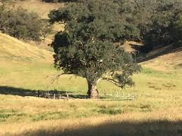 new funding for paddock tree project riverina highlands landcare