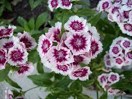 spring flower file spring flowers jpg wikimedia commons
