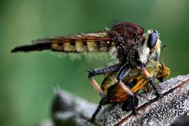 dragonfly eating jpg 5616 3744 макро мир pinterest