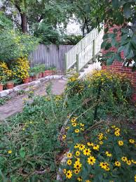 native plants for butterfly gardening benton soil u0026 water 2017 august monthly gathering highlights wild ones u2013 st louis