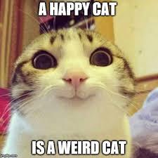 Weird Cat Meme - smiling cat meme imgflip