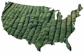 Map Of The Carolinas Usa by The Complete Guide To Tea Grown In The United States And Canada