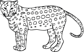 coloring pages of a cheetah animal animal coloring pages of