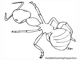 insect coloring pages getcoloringpages