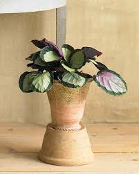 indoor plants that need little light houseplants for any kind of light martha stewart