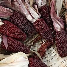 ornamental corn seeds grow ornamental corn harris seeds