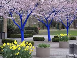 Outside Backyard Ideas Bright Painting Ideas For Decorating Trees Creative Backyard Ideas