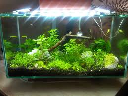 Fluval Edge Aquascape Re Model Aquascaping World Forum