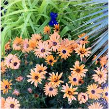 Lafayette Florist 125 Best Virtual Garden 1 Images On Pinterest Garden Plants