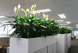 keeping plants in the office can help clean the air and even