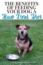 the benefits of feeding your dog a raw food diet dogs and barks