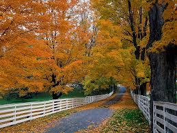 autumn makes me homesick pointless cafe