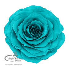 teal roses direct to retail fresh cut flowers farms direct