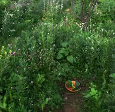 forest garden western colorado aaron jerad designs