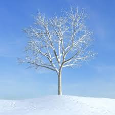 3d white snowy tree cgtrader