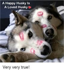 Pun Husky Meme - happy husky memes husky best of the funny meme