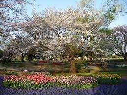 flower festival at showa kinen park wandering myra