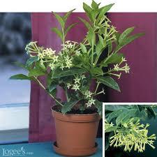 Fragrant Plants Best Smelling Houseplants Diy Network Blog Made Remade Diy