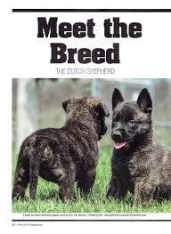 belgian sheepdog breeders indiana our dutch shepherds earn their stripes at cher car kennels