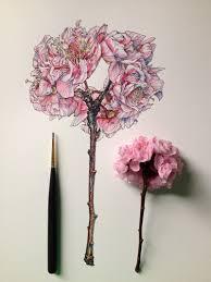 flowers in progress scientific illustrator taunts us with spring