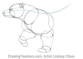 cartoon polar bear how to draw a polar bear step by step