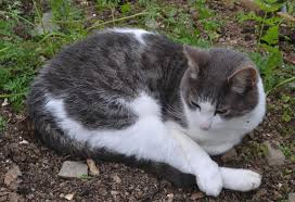 How To Keep Cats Out Of Your Backyard How To Stop Cats Pooping In The Gardengreenside Up