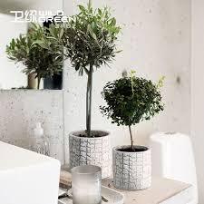 plante de cuisine cuisine plante dans la cuisine plante dans la or plante dans la