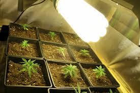chambre de culture 1m2 tutos culture de cannabis les eco basse consommation