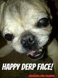 Funny Pug Memes - april pug memes