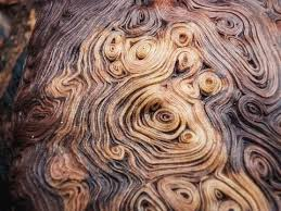 what is burl wood it s weirder than you think tree hut wooden