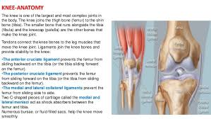 Knees Anatomy Complications Of Total Knee Replacement