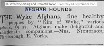 afghan hound giving birth afghan hound times kennel breeder history wyke afghan hounds uk