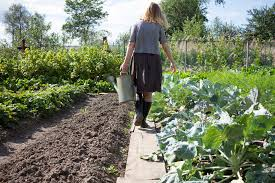 how to make a lasagna garden no till no dig organic