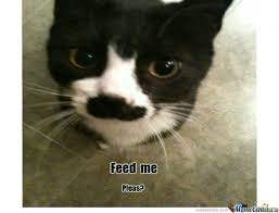 Feed Me Seymour Meme - feed me seymour meme 28 images feed me seymour memes best