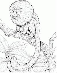 stunning aladdin monkey coloring pages with monkey coloring page