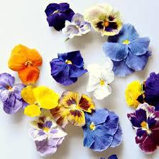 simply edible freeze dried edible pansies simply edible flowers
