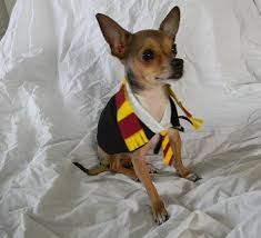 bookish halloween costumes for pets