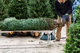 christmas tree delivery christmas tree delivery london christmas trees delivered