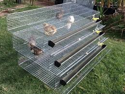 Backyard Quail Pens And Quail Housing by 3 Tier Fully Automatic Quail Laying Cages Quail Pinterest