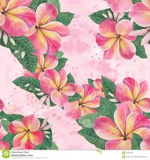 flowers leaves and buds of plumeria watercolor background