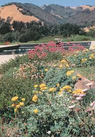 california native plant garden pacific horticulture society the mediterranean garden image