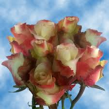 roses online 50 real yellow pink roses cheap bouquet to order online