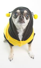 9 best dogs in bee costumes images on pinterest bumble bees