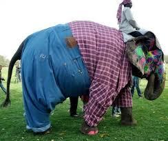 Elephant Meme - indian elephant in pants meme guy