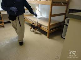 Do Bed Bugs Get On Dogs University U0026 College Bed Bug Remediation Mcneely Pest Control