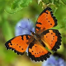 260 best butterflies images on butterflies beautiful