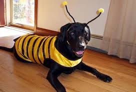 Jake Dog Halloween Costume Dressed Pets Halloween Pictures