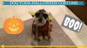 hilarious dog in star wars yoda halloween costume 2015